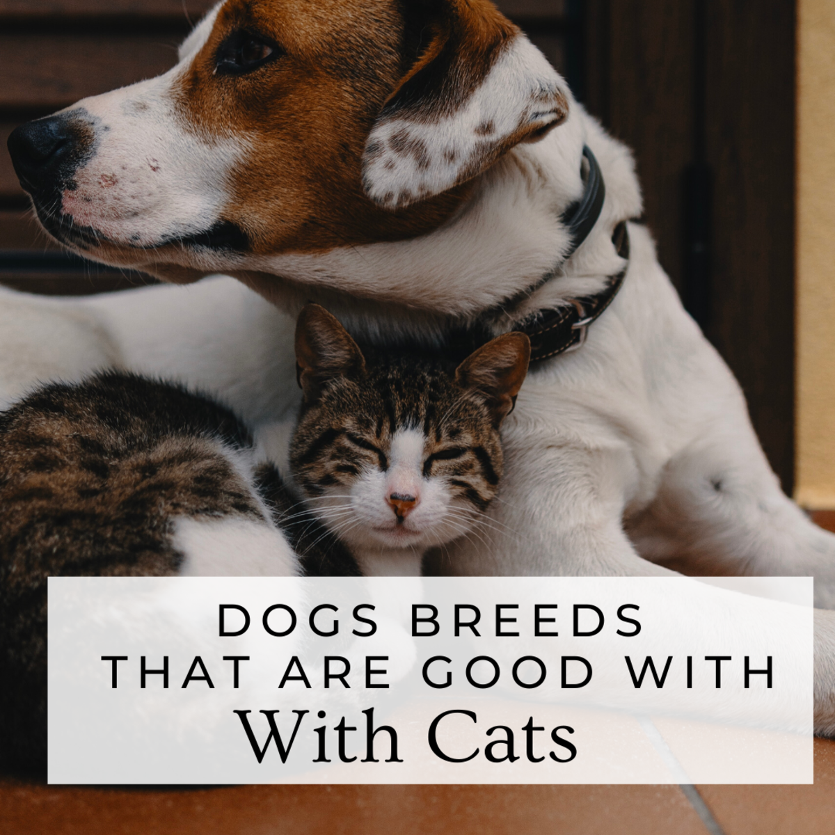 Dogs That Like Cats