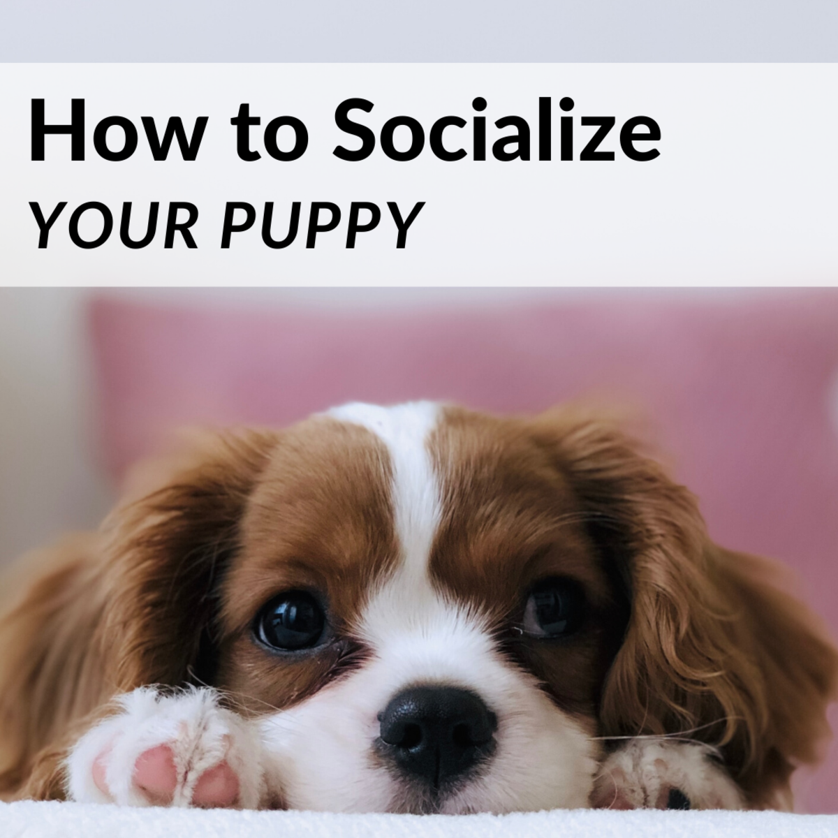 Tips for How to Socialize Your Puppy