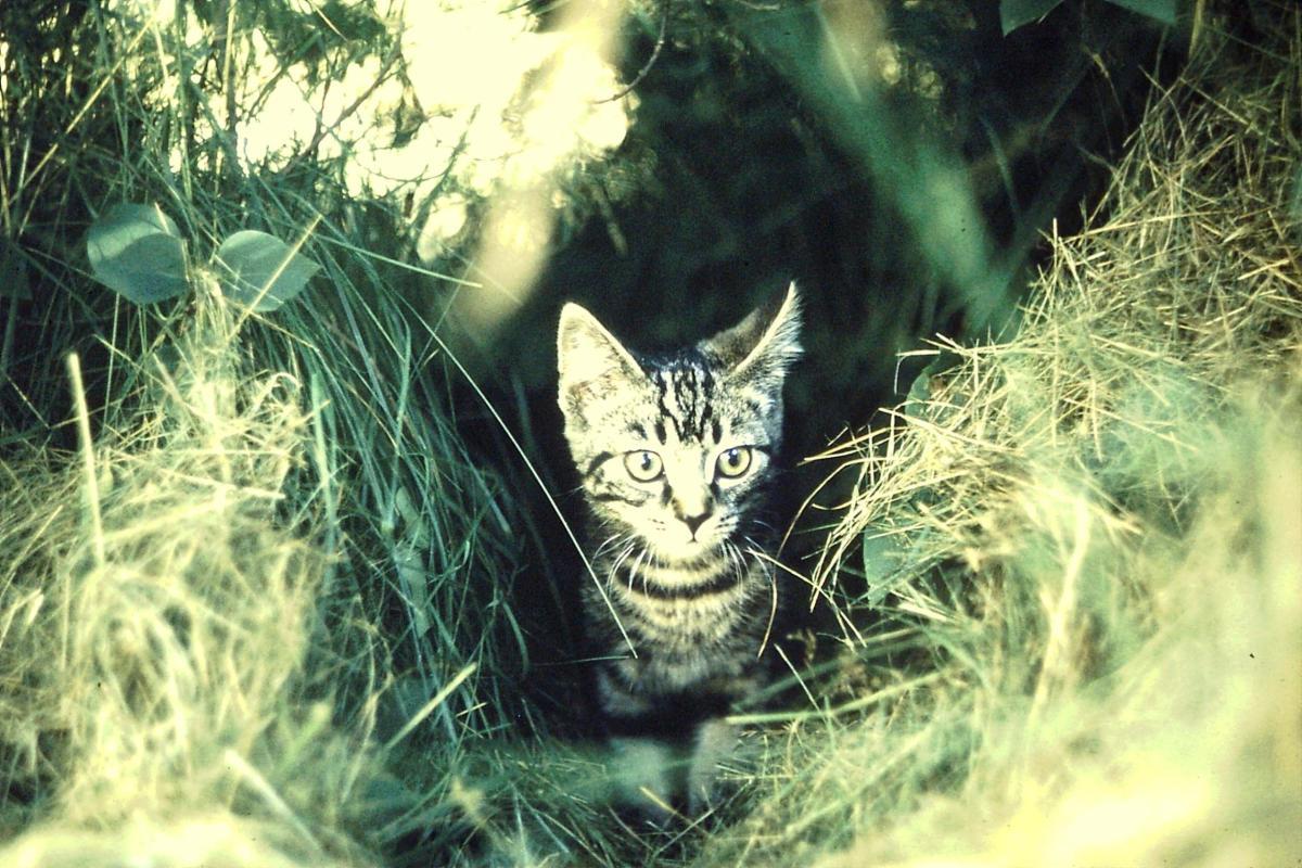 Artsy Cat 1973