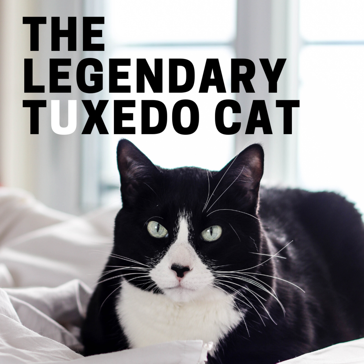 The Legendary Tuxedo Cat