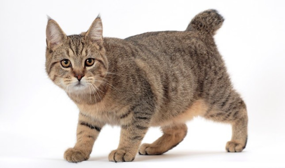 Top 10 Weirdest Cat Breeds