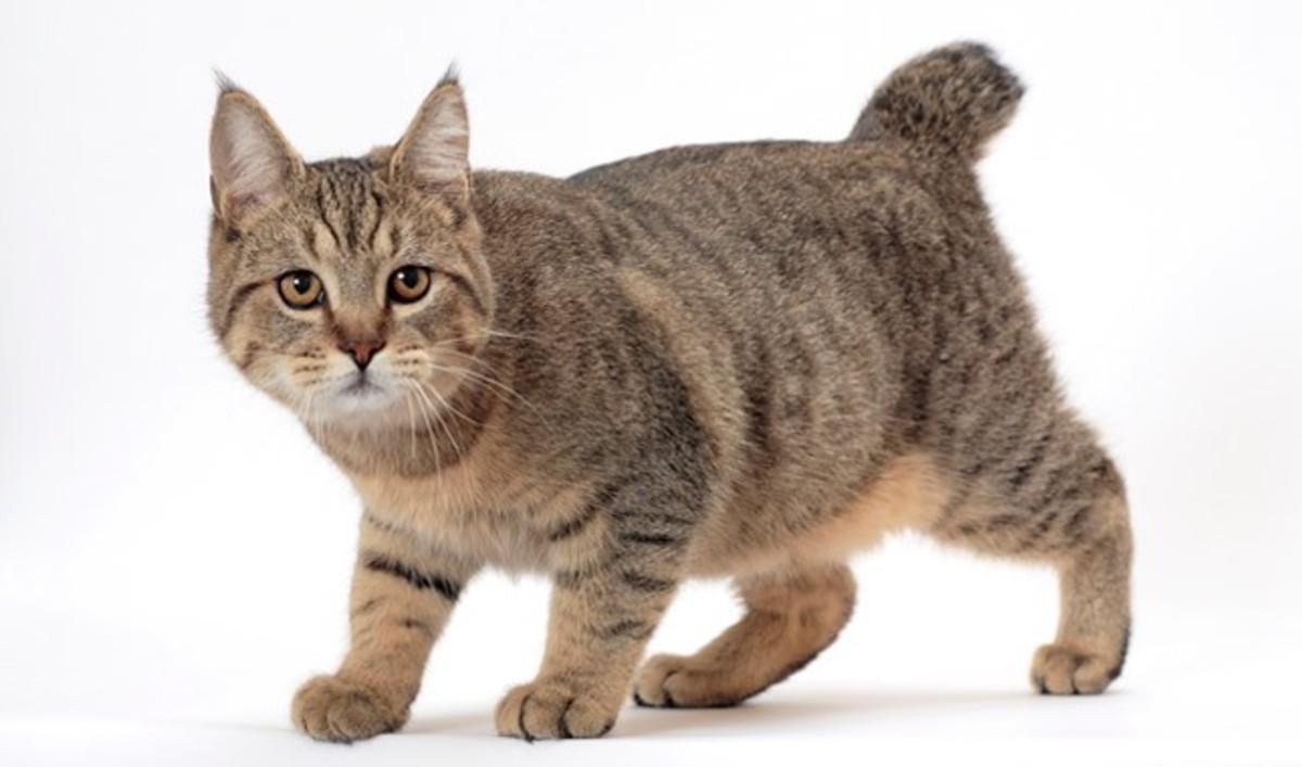 Top 10 Weirdest Cat Breeds