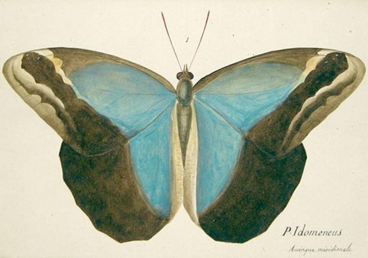 Flutters: A Poem