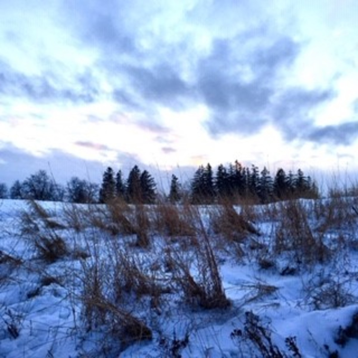 Winter Will