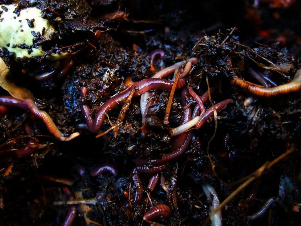 Insects Rejoice: A Poem