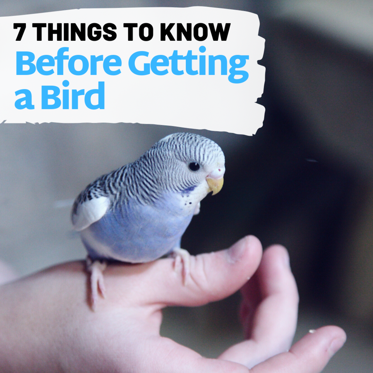 7 Things You Should Know Before Buying a Pet Bird