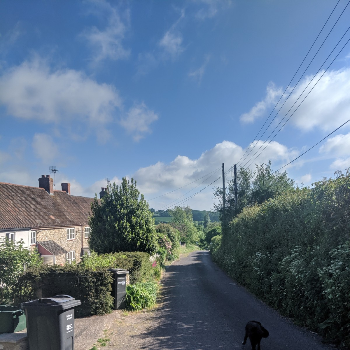 English country lane, with friendly dog.