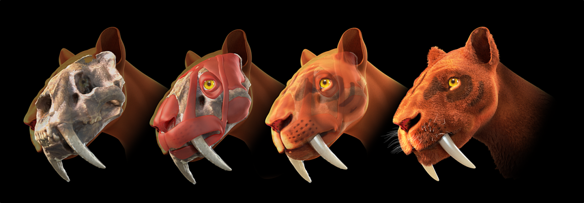Although no one really knows what a sabertooth cat looked like, there have been many guesses. This is just one possibility of what it looked like.