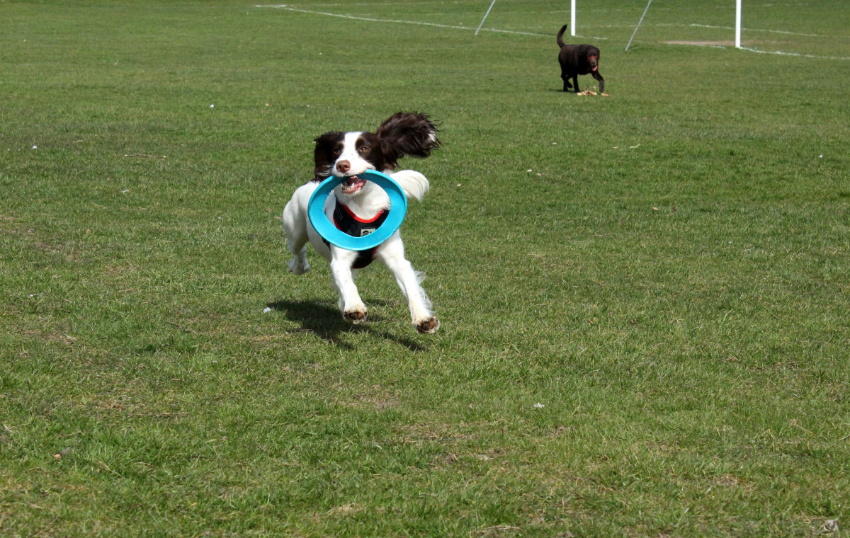 Dogs love games of fetch, but there can be hidden dangers to this favourite pasttime