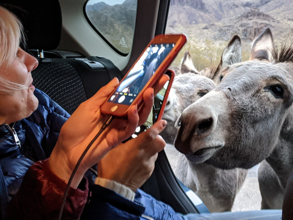 A couple of burros checking out the back seat while my wife and daughter take pictures.