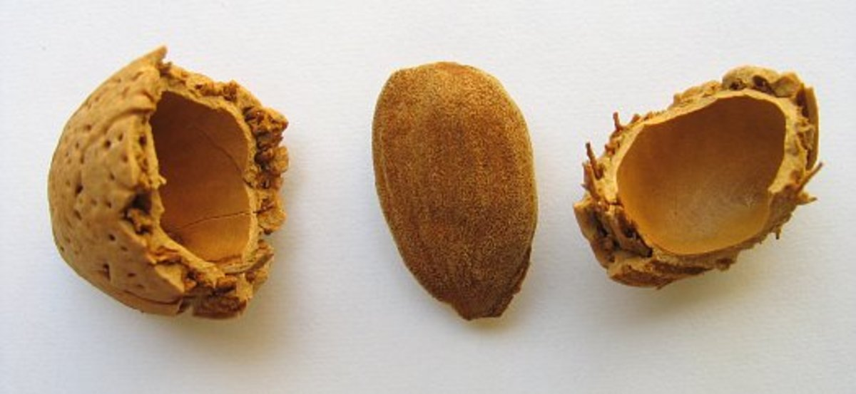 Almond oil is a rich skin emollient ideal for dry skin.