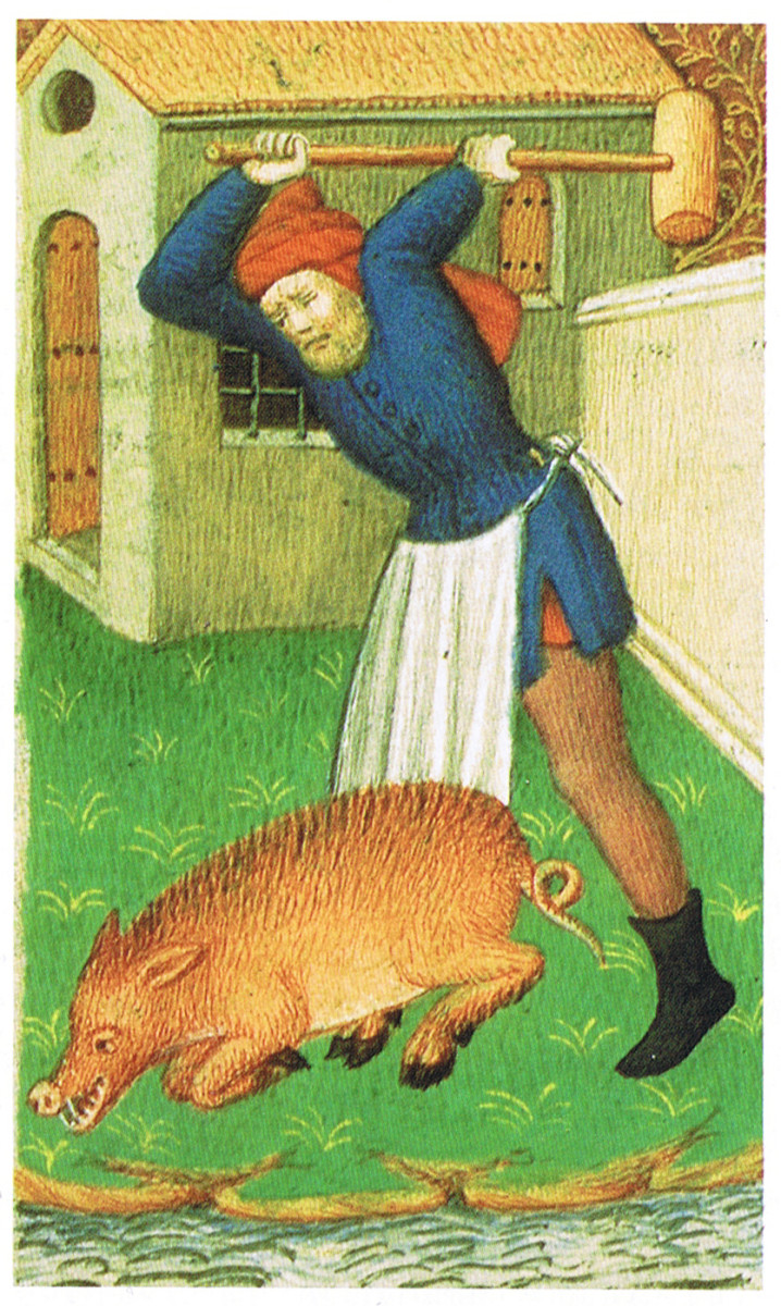 Medieval Man Slaughters a Pig - And Wears and Apron