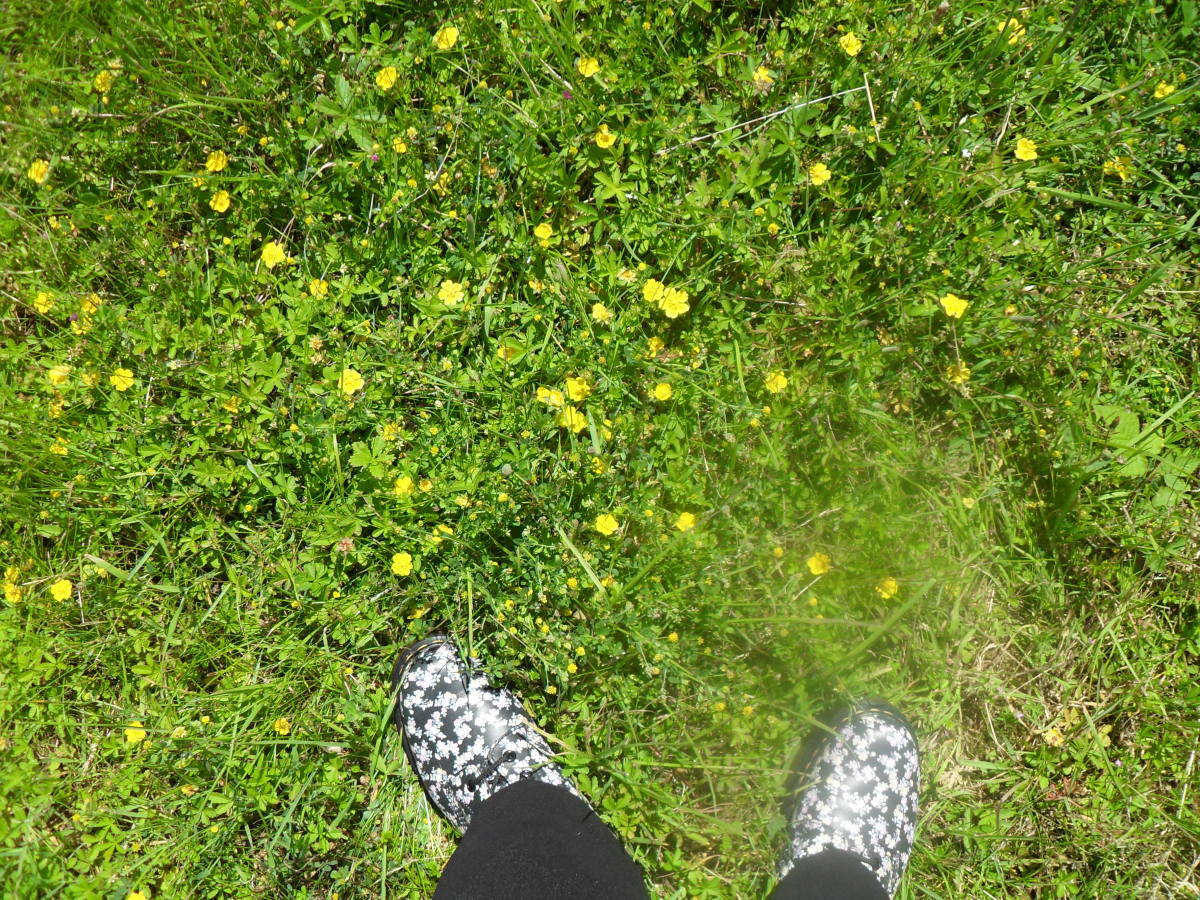 My flowered Docs kissing the English countryside.