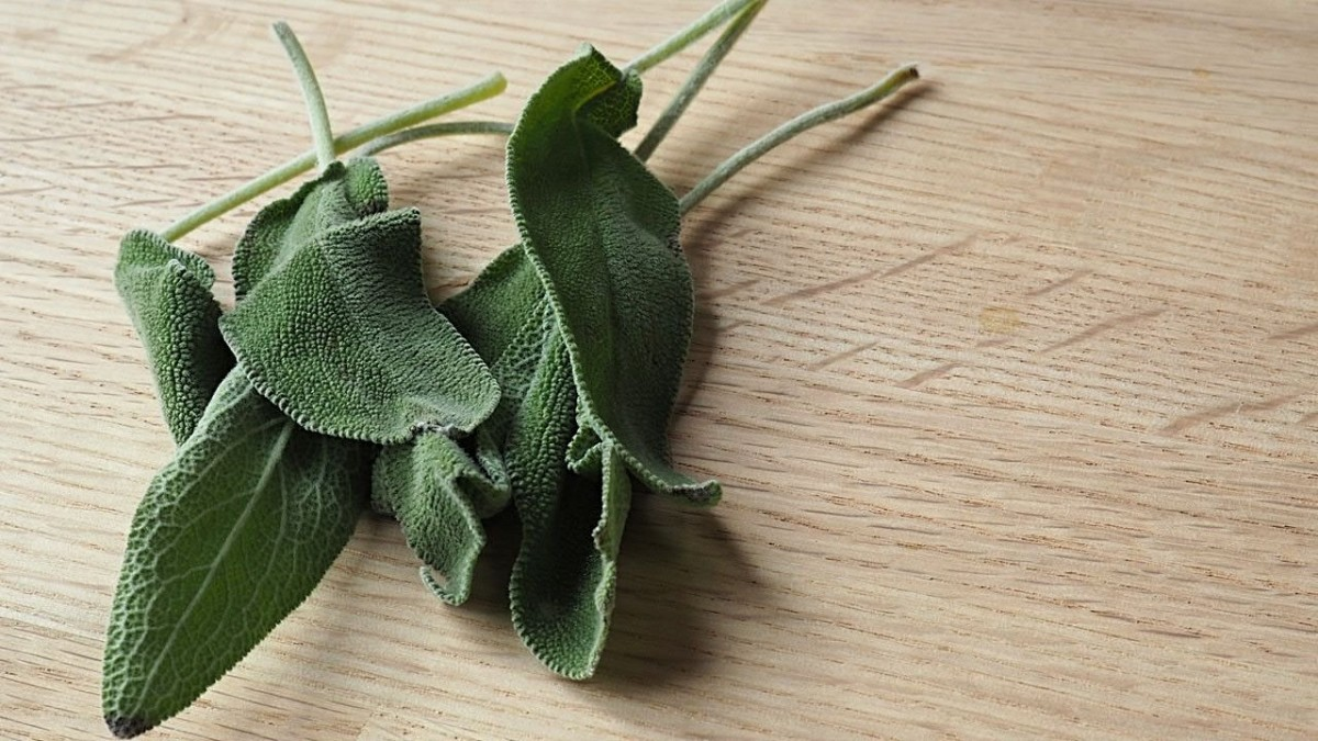 Sage is used in cooking and as an incense, but did you know it can also help darken your hair?
