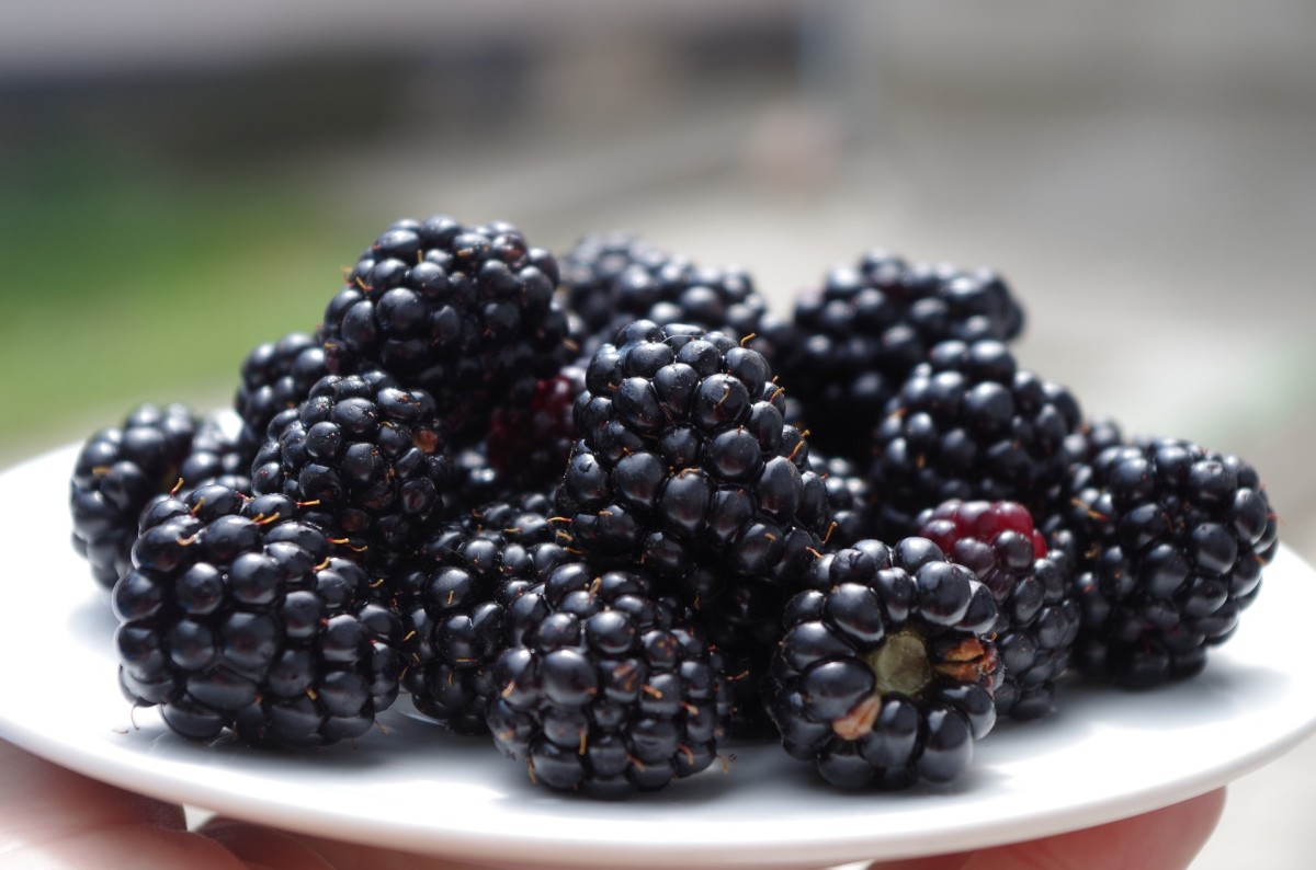 Blackberries are one natural method of dyeing your hair purple.