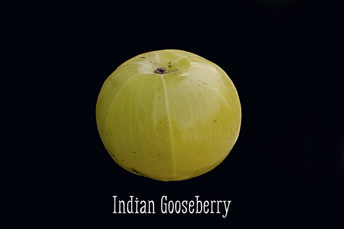The Indian gooseberry, or amla, is an important medicinal food used in many of these hair remedies.