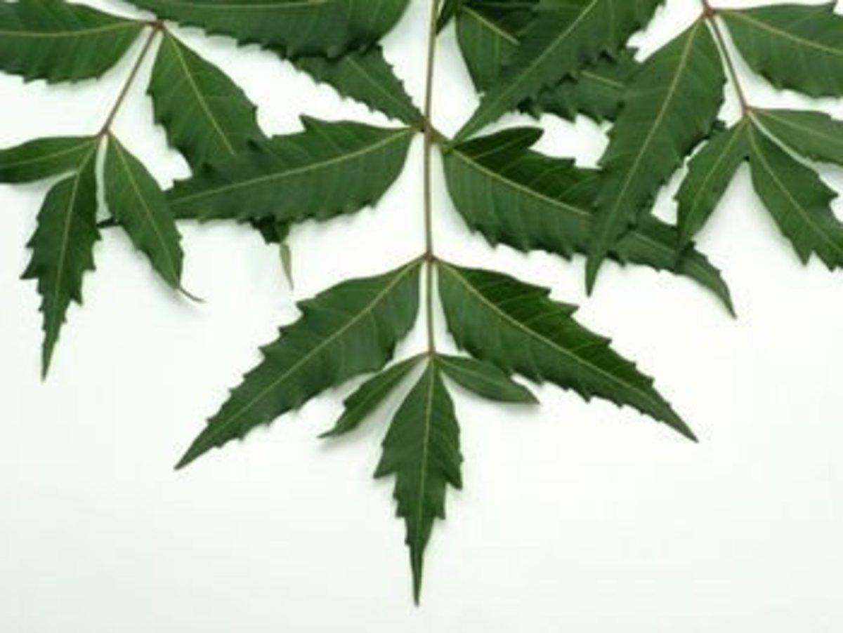 Anti-bacterial neem.