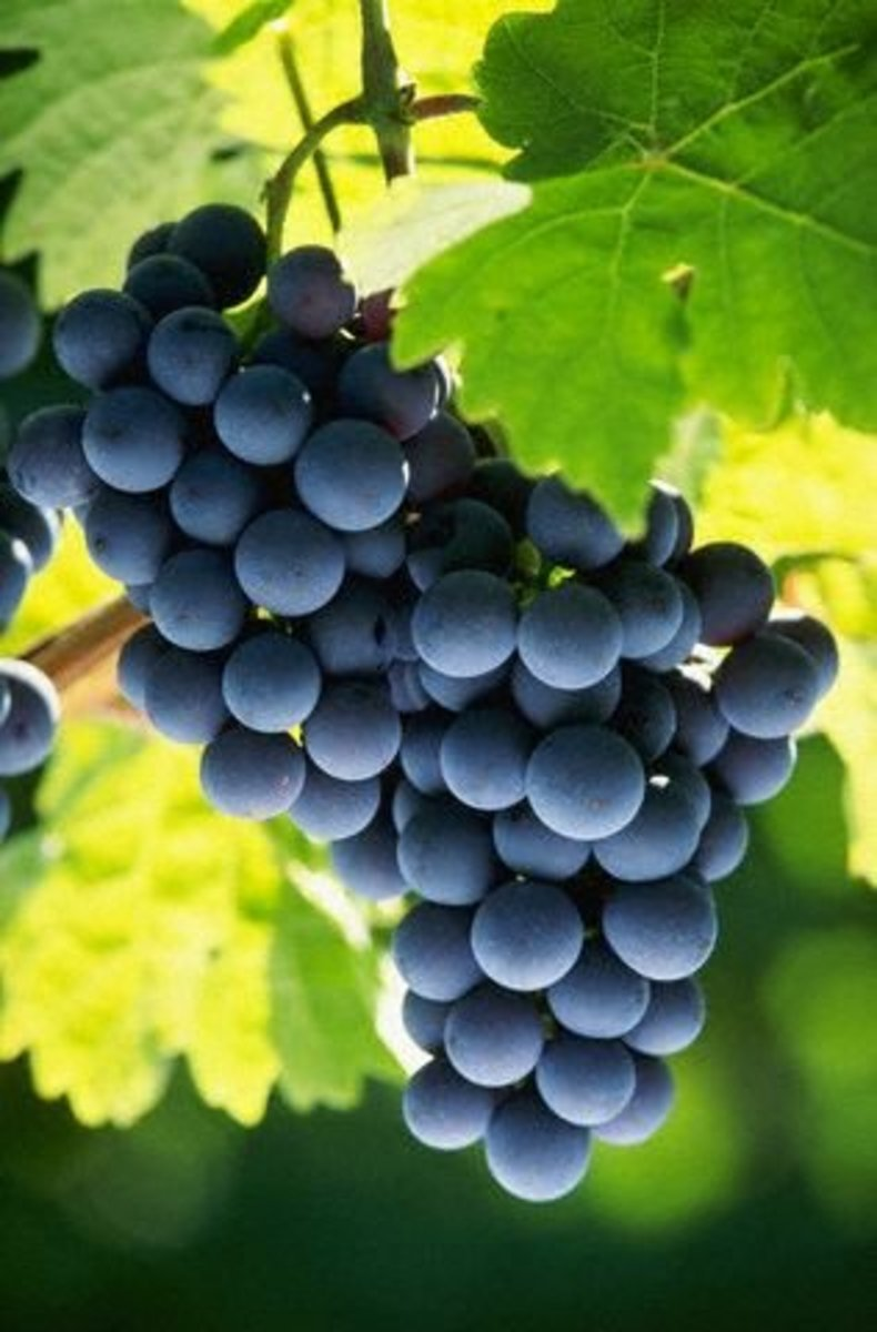 sensitive skins will love grapeseed oil as a base in skin products.