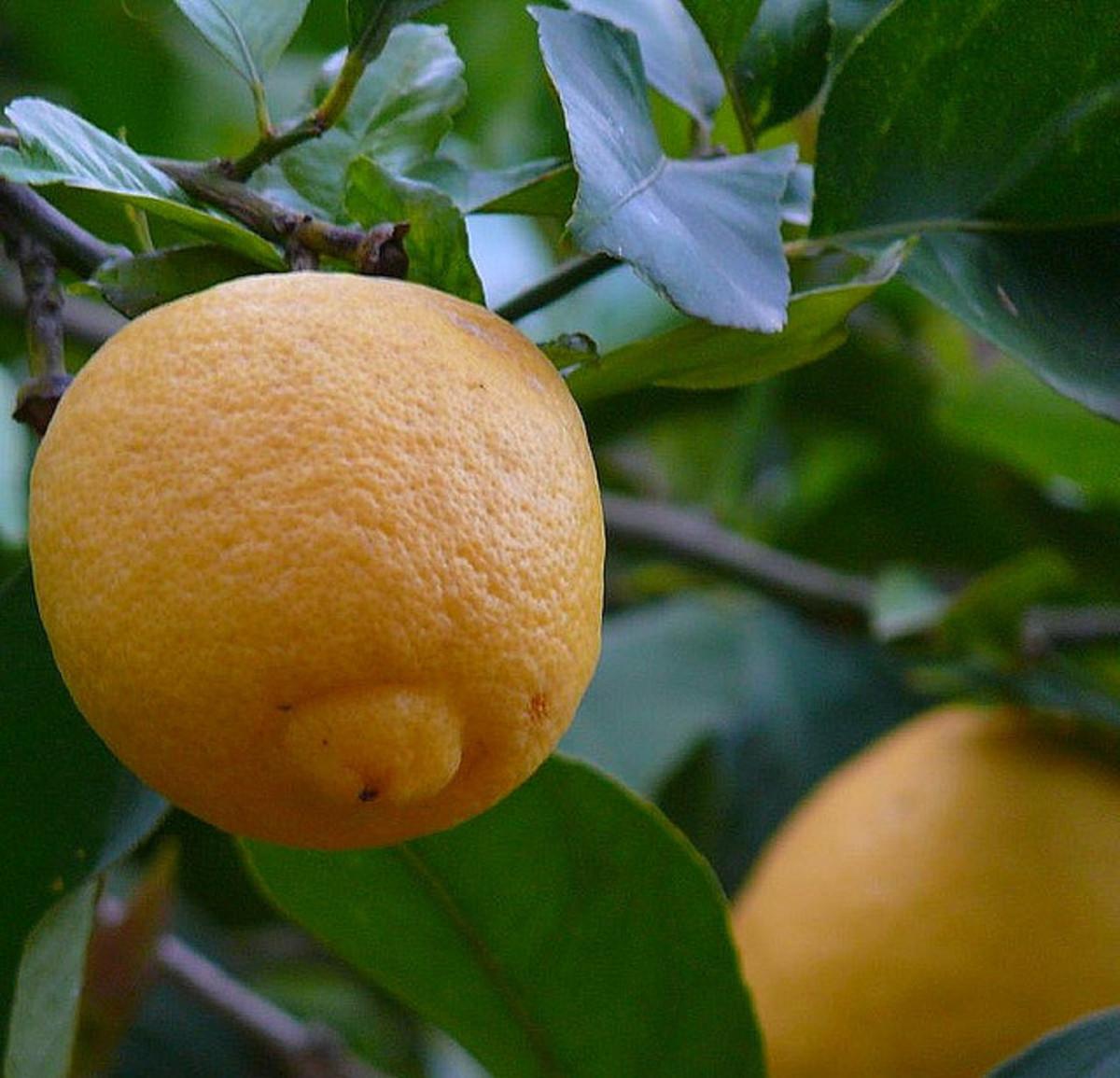 MMMM..... Lemons!