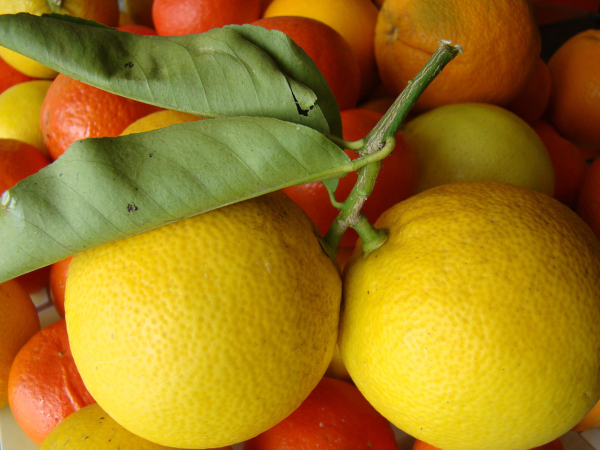 Lemons are one of the fruits classed as citrus fruits.