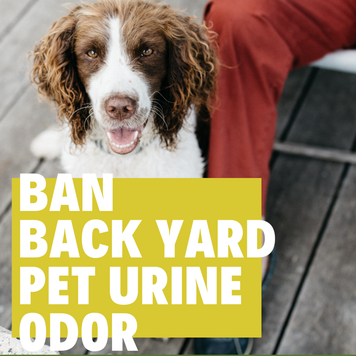 How to Get Rid of Dog Pee Smell in the Back Yard Naturally
