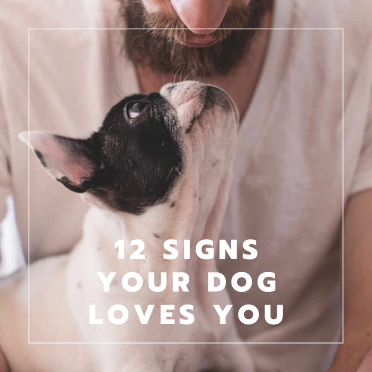 12 Signs Your Dog Loves You and How to Be the Person Your Dog Loves