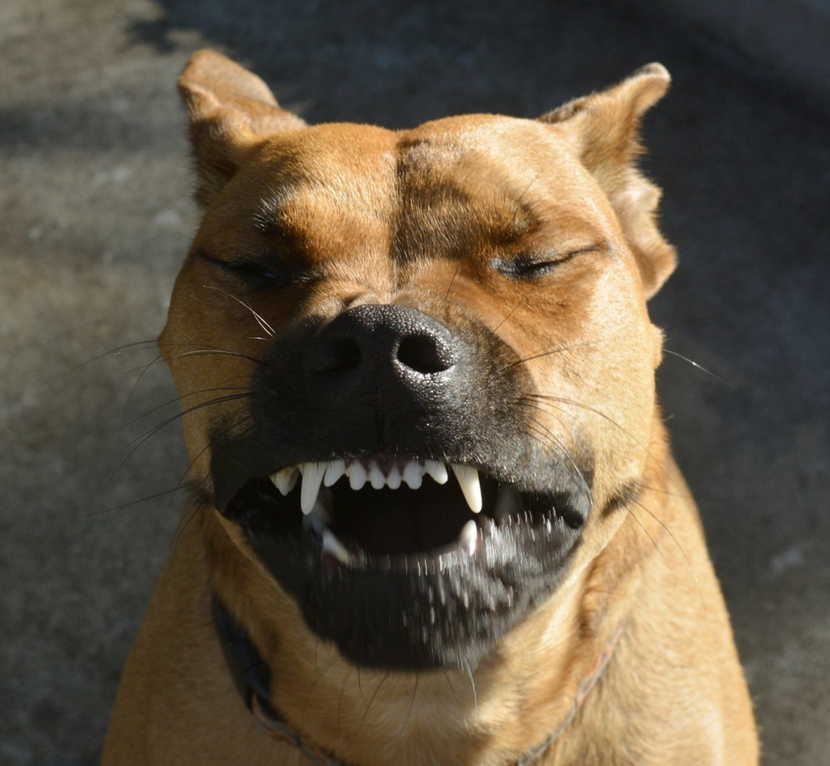 Dogs can sneeze both 'normally' and by drawing in air, called reverse sneezing