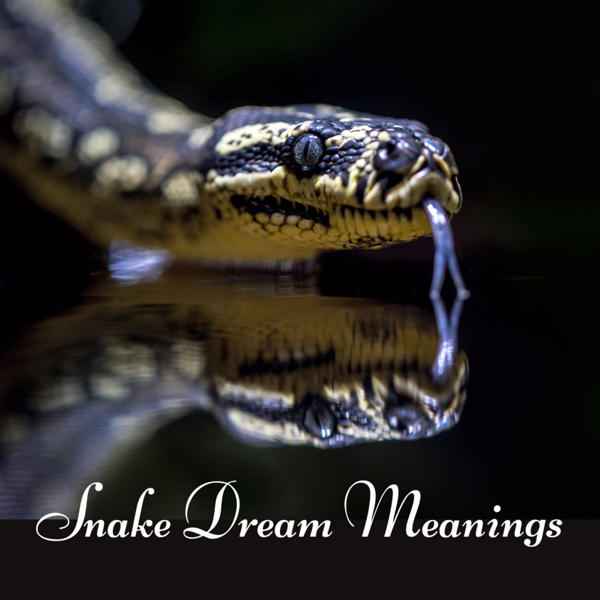 What does it mean if a snake appears in your dream?