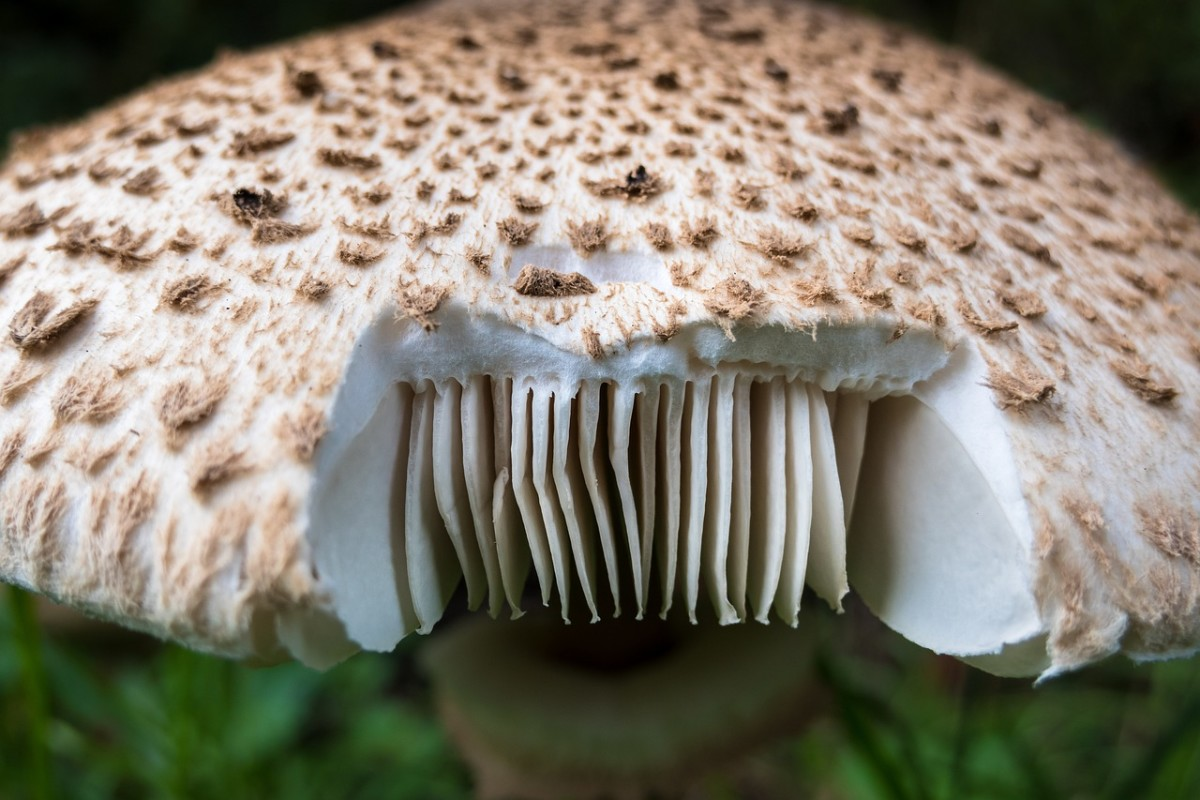 top-8-freaky-facts-about-fungus