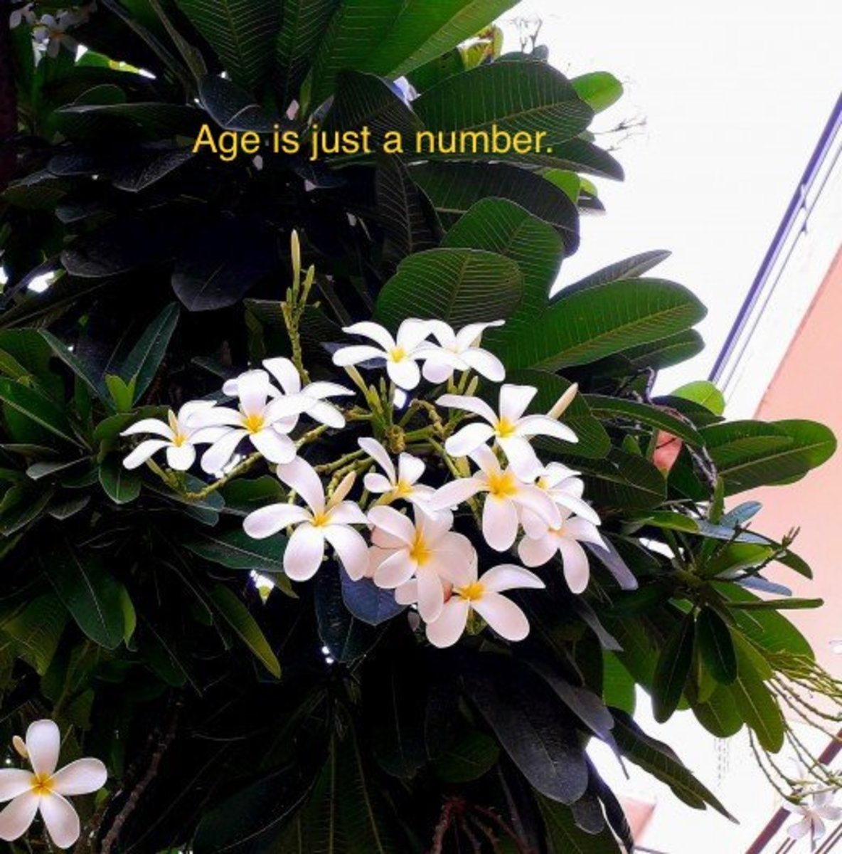 Get inspired by the life cycle of the flowers. Age is just a number.