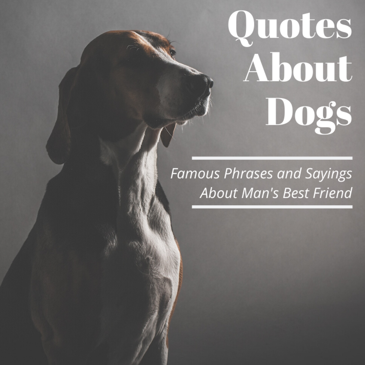 Famous Quotes About Dogs