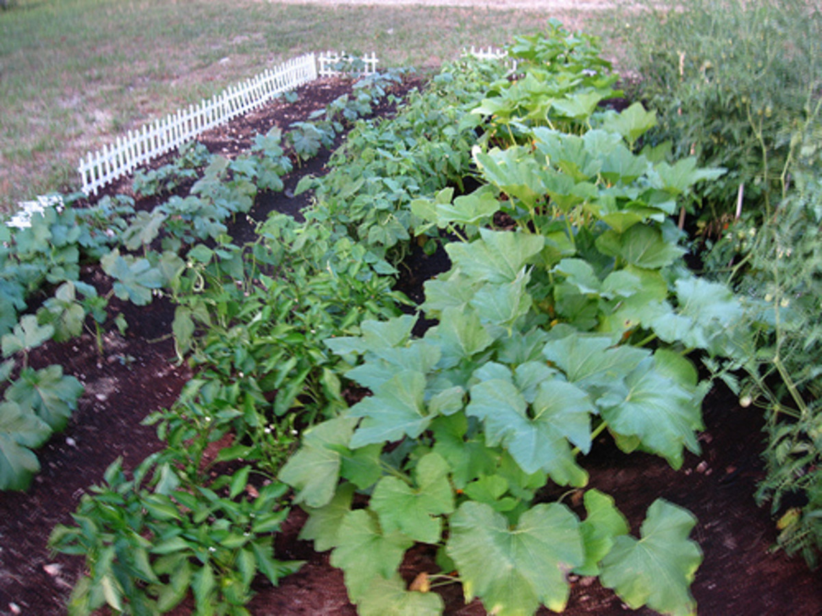 Types of Vegetable Gardening Styles