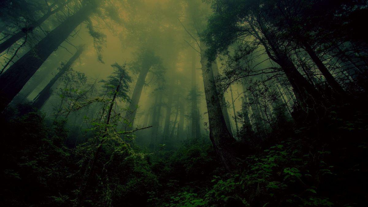 Skuna River Bottom Forest - 1914