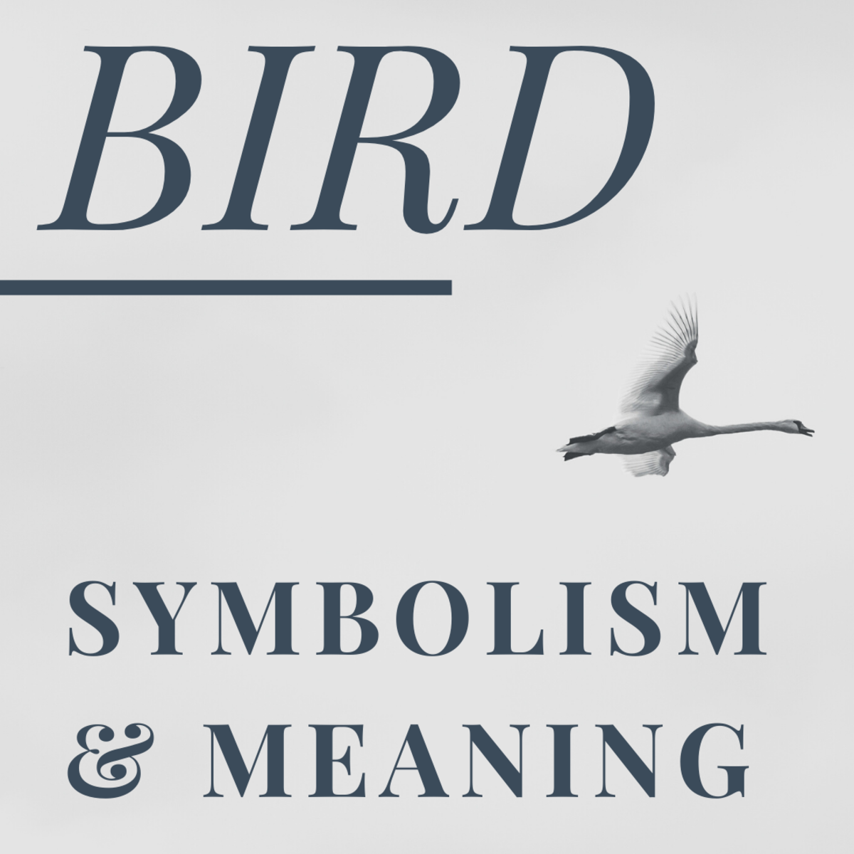 Bird Symbolism, Spiritual Meanings, and Omens Explained