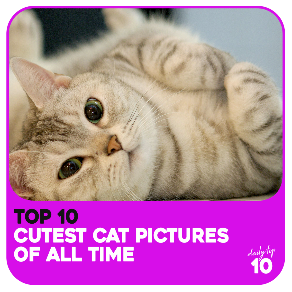 Top 10 Cutest Cat Pictures of All Time (Plus Honorable Mentions)