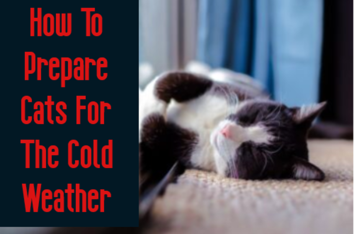 Heating pads insulate your cats body heat to help keep them warm!