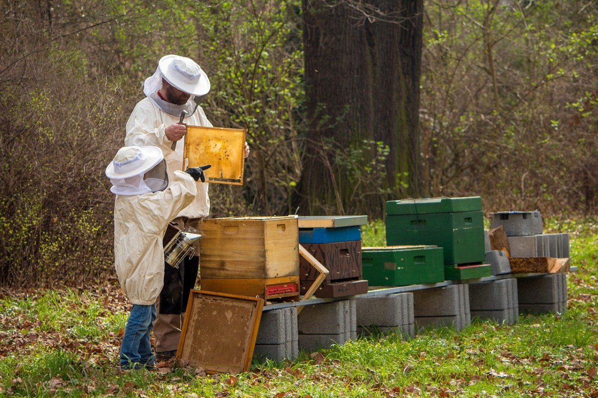 What Are the Benefits of Beekeeping?