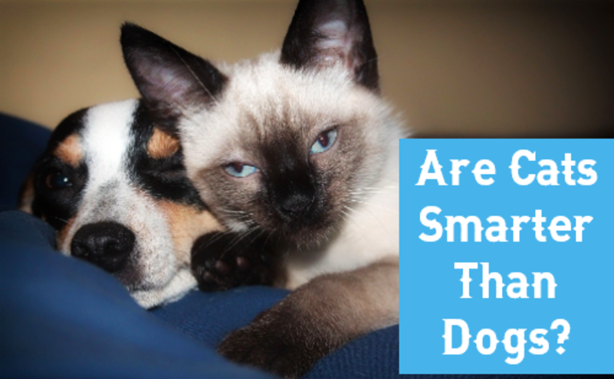 Who's Smarter: Cats or Dogs?