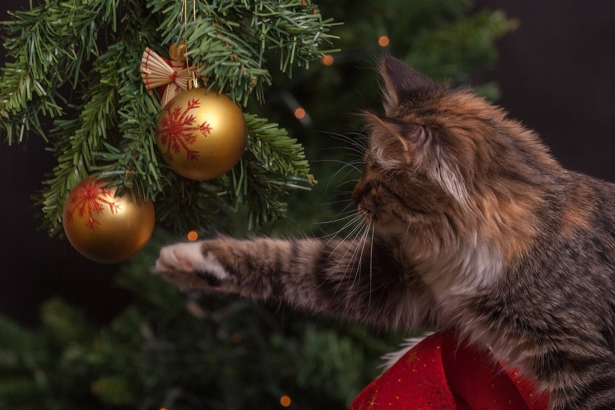 Dangling ornaments are just too tempting even for older, sedate cats. They love to bat them around. Younger cats find them irresistible and will knock them off, chase them about, and try to look innocent when they break.