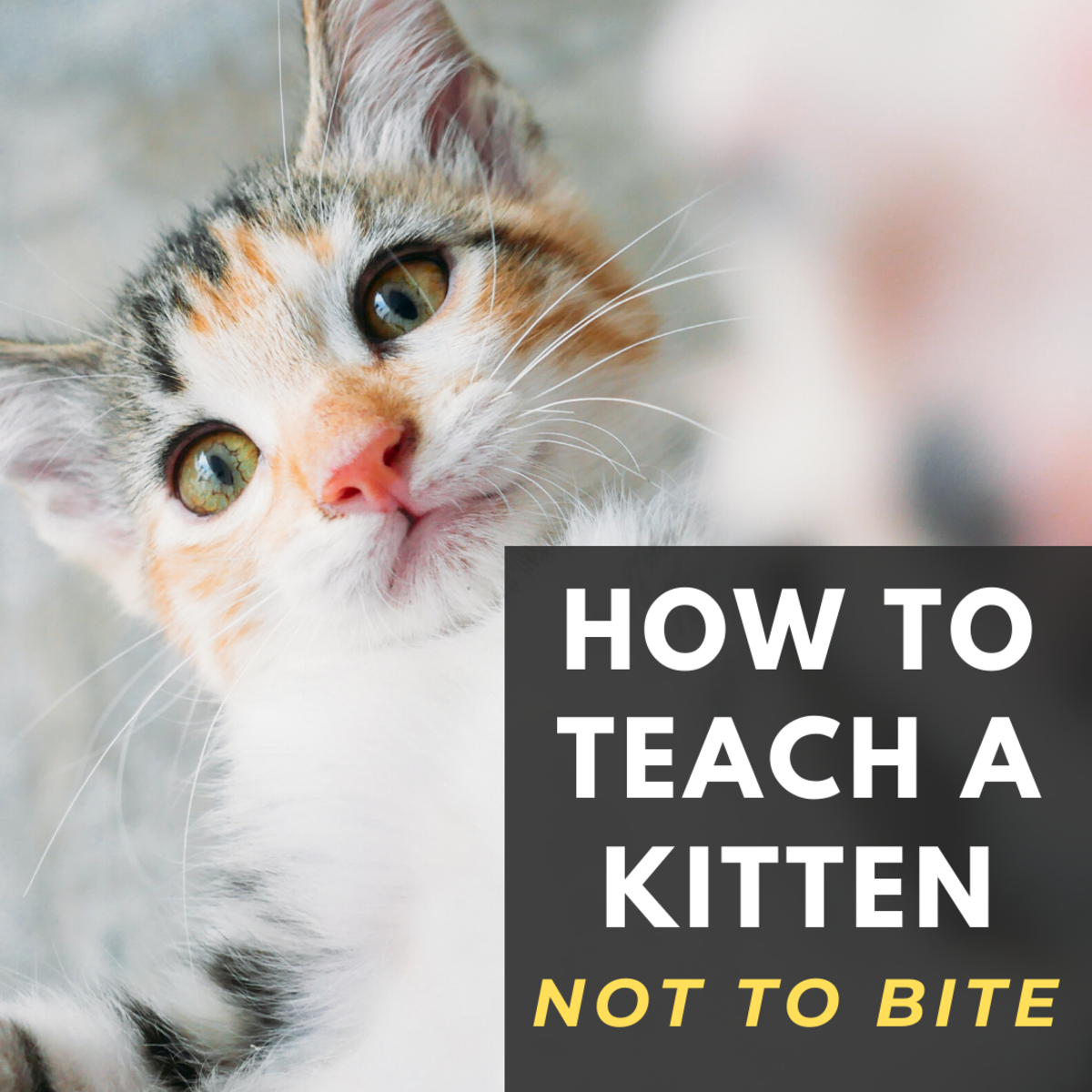 How to Teach Your Kitten Not to Bite
