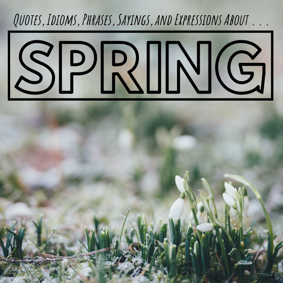 A surprising amount of expressions, idioms, and turns of phrase have been created about the spring season over the years.