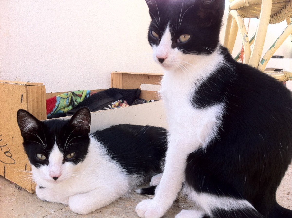 Feral Cats Of Playa Blanca, Lanzarote. Part Five