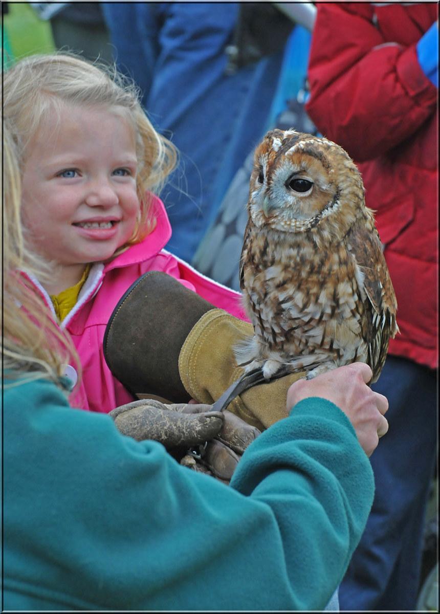 7 Reasons Owls Make Great Pets