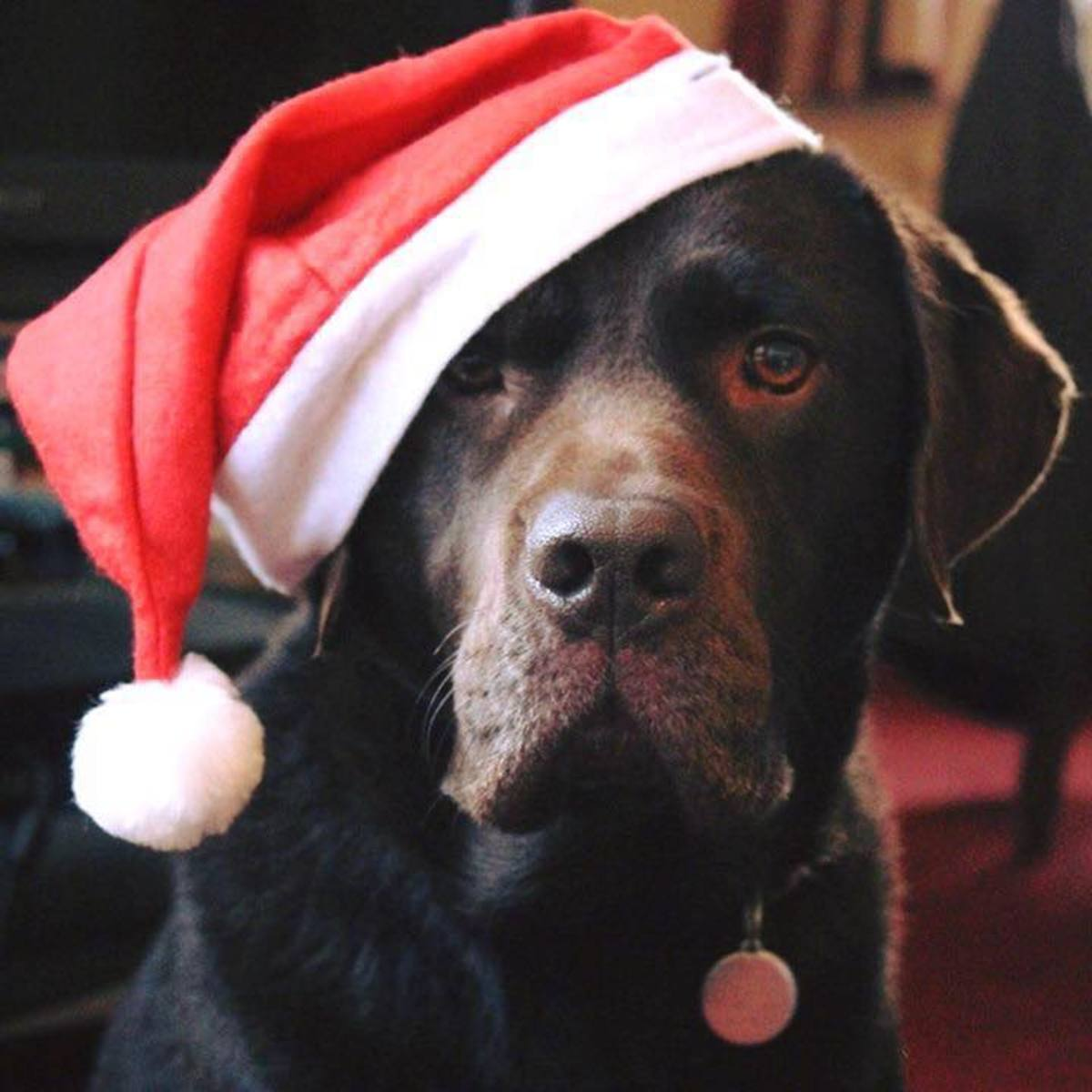 10 Ways Christmas Can Be Dangerous for Your Dog