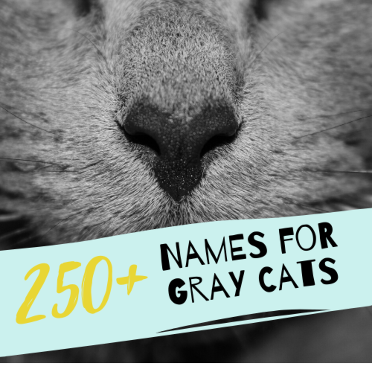 250+ Best Names for Gray Cats and Kittens