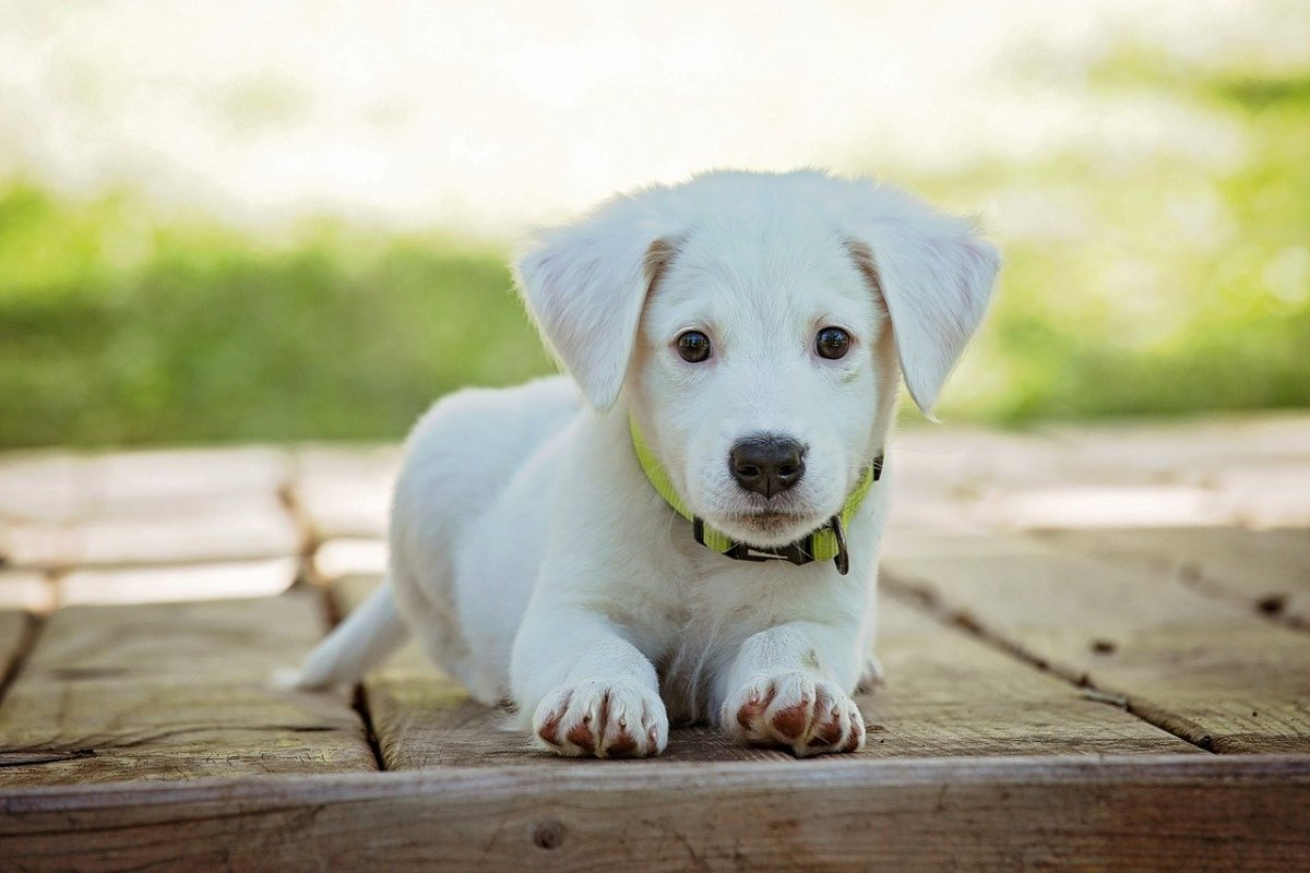 Crate Training Your Puppy: A Quick Guide