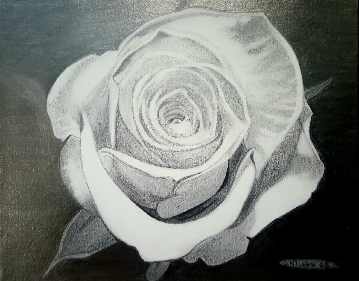 """A Simple Rose - My Token of Love"" - graphite drawing pencils."