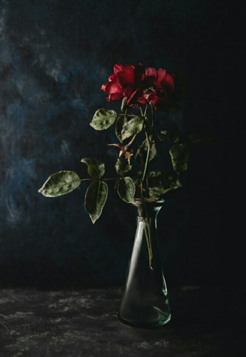 Dying Rosebud