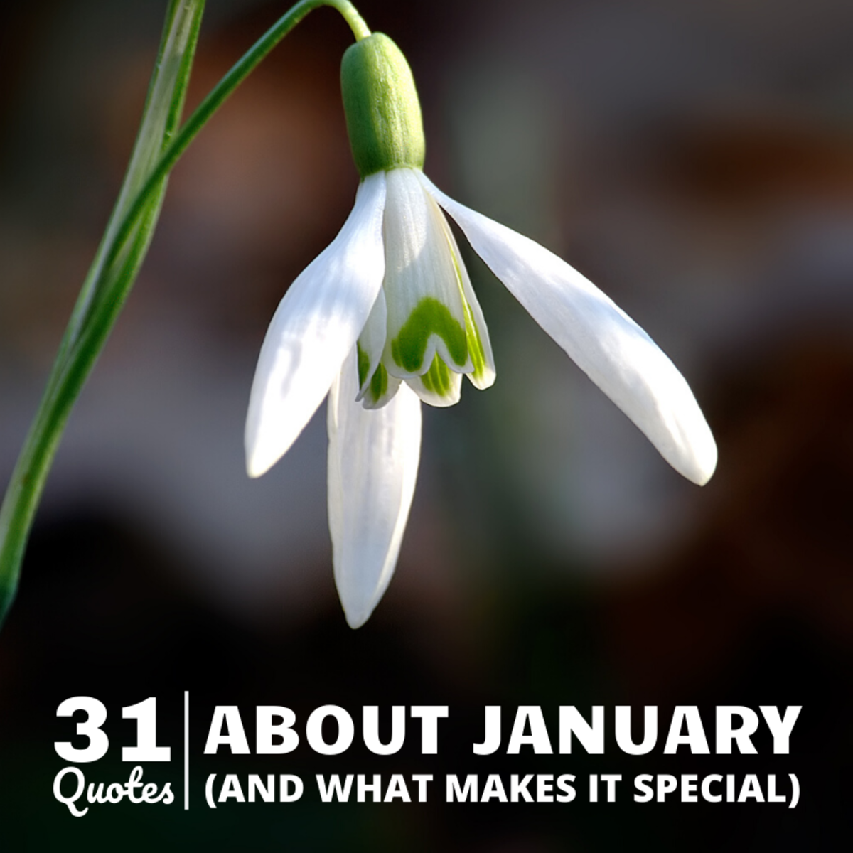31 Quotes About January and What Makes It Unique