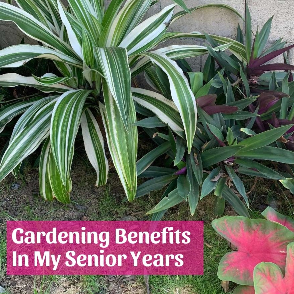 5 Gardening Benefits in My Senior Years